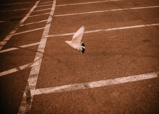 white bird flying over the track field during daytime