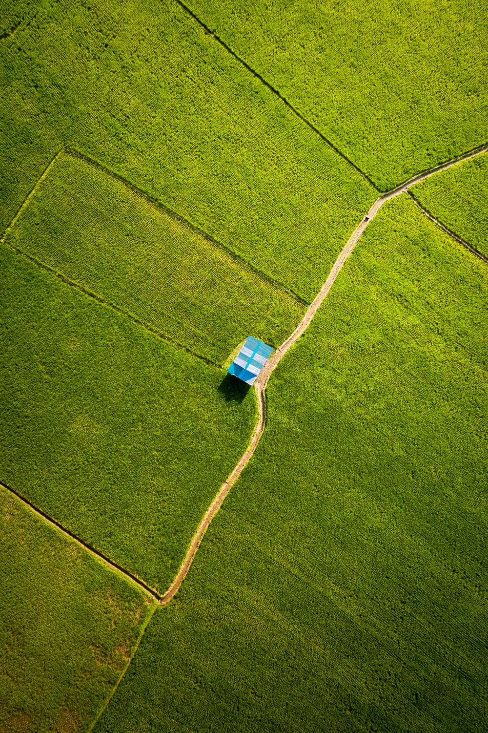 blue and white plastic container on green grass field