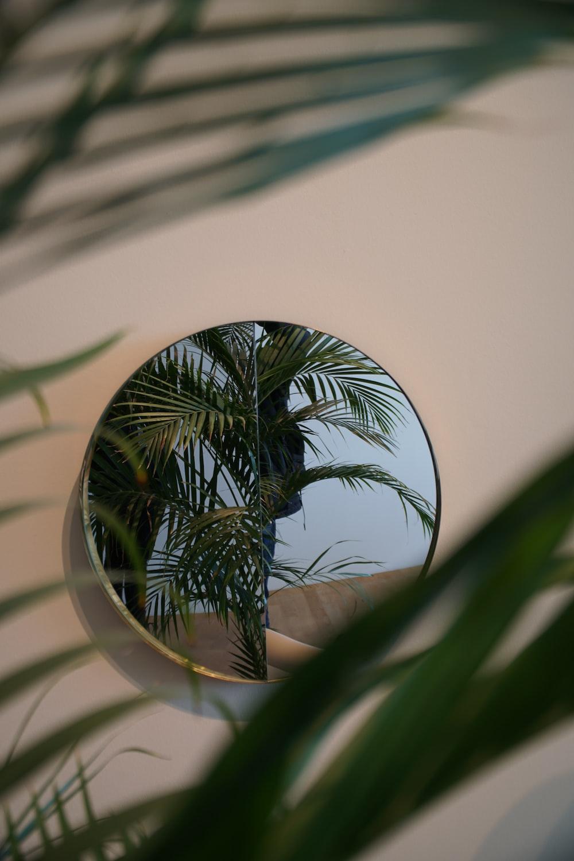 green palm tree in white round pot