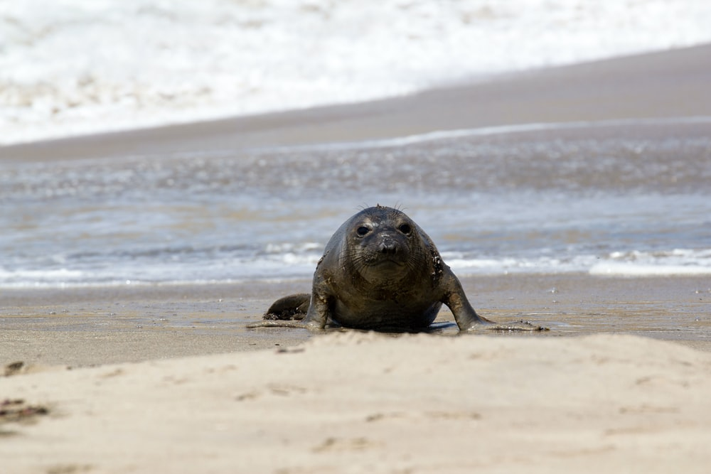 sea lion on beach shore during daytime