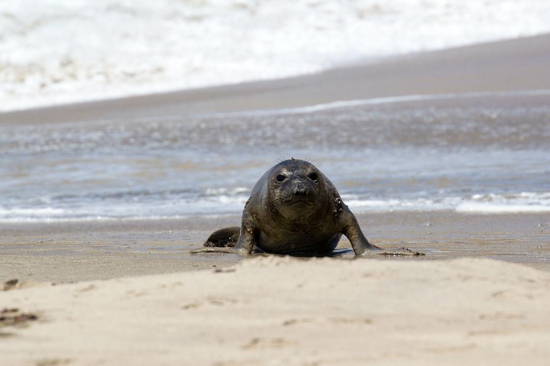 Curious seal at the beach
