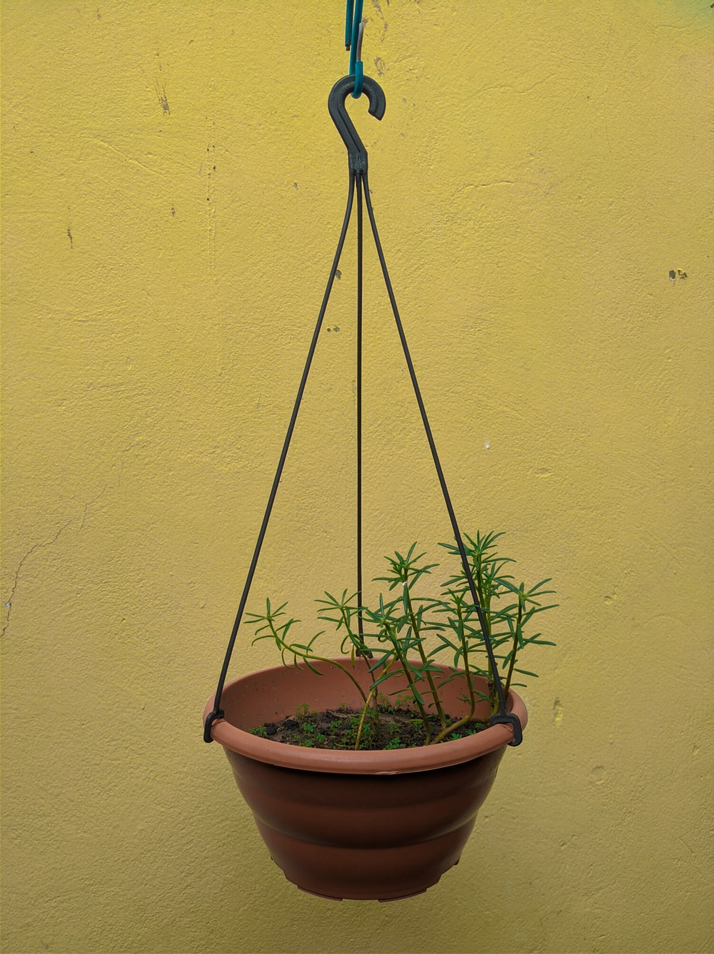 green potted plant on brown clay pot