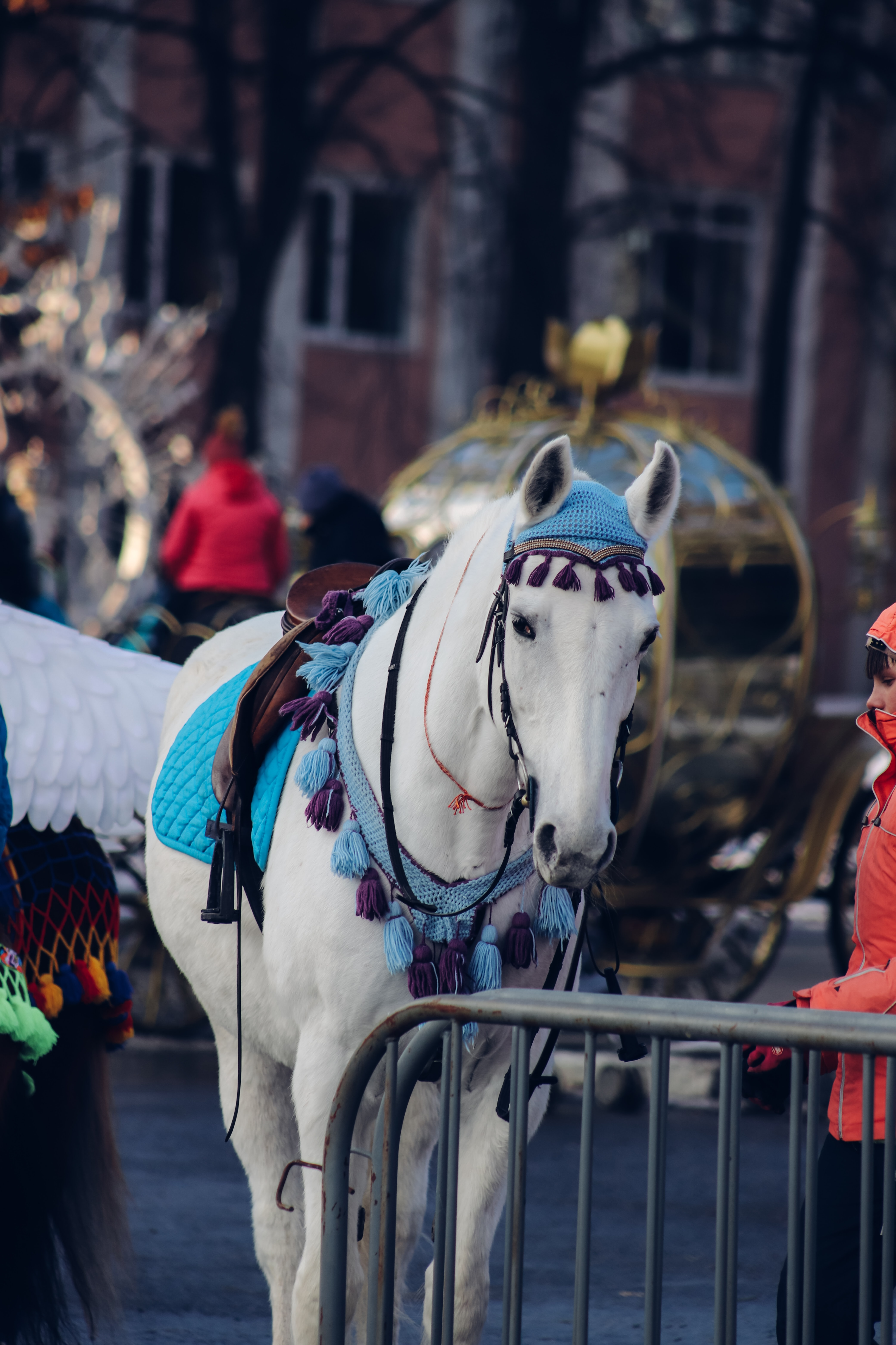 White Horse With Red And Blue Horse Carriage Photo Free Animal Image On Unsplash