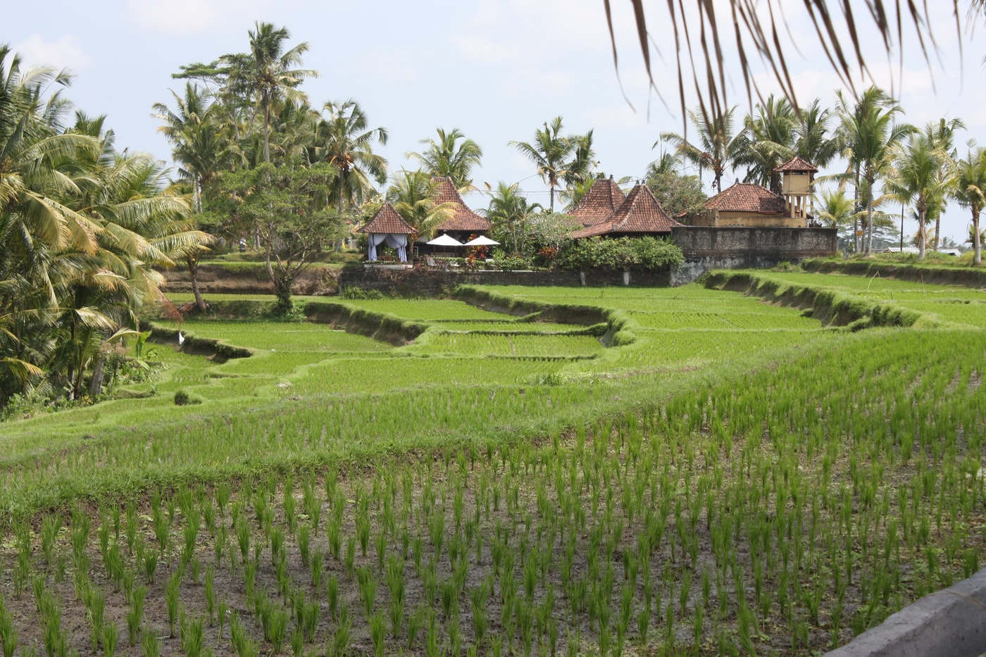 green grass field near brown house