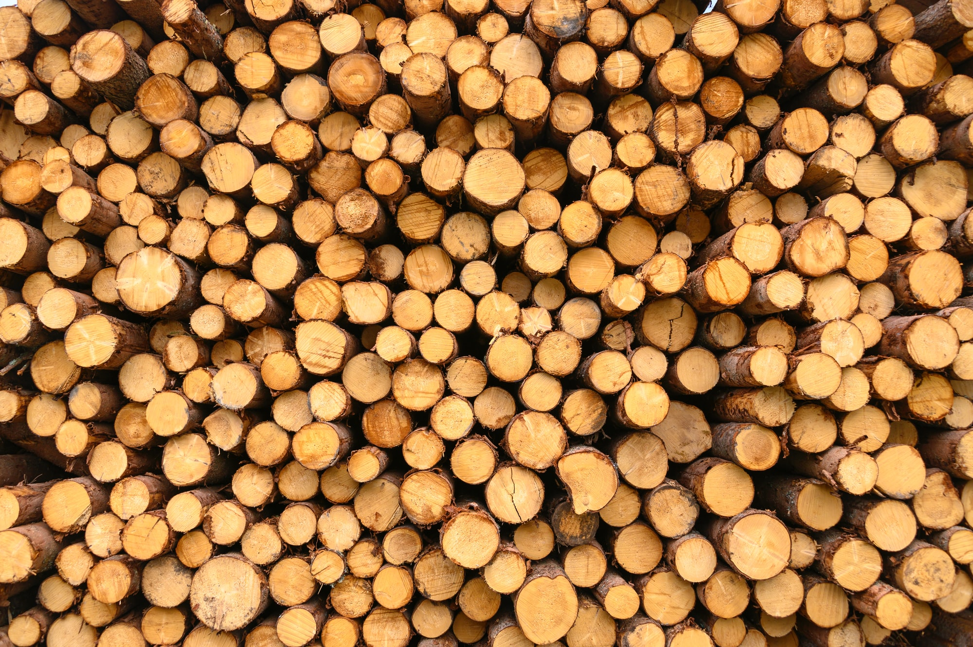 Logged Wood in South Tirol