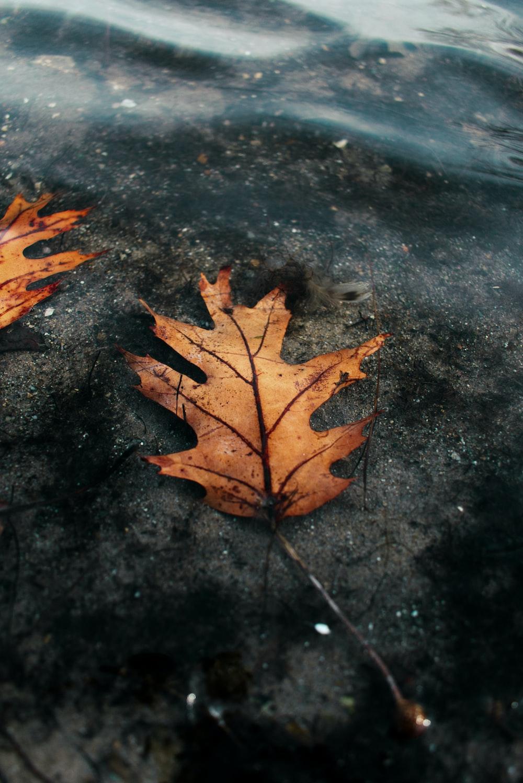 brown maple leaf on black concrete floor