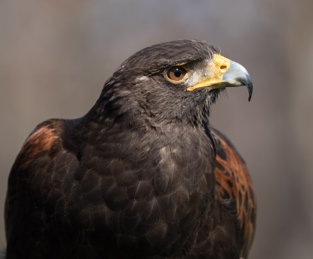 brown and black bird in close up photography