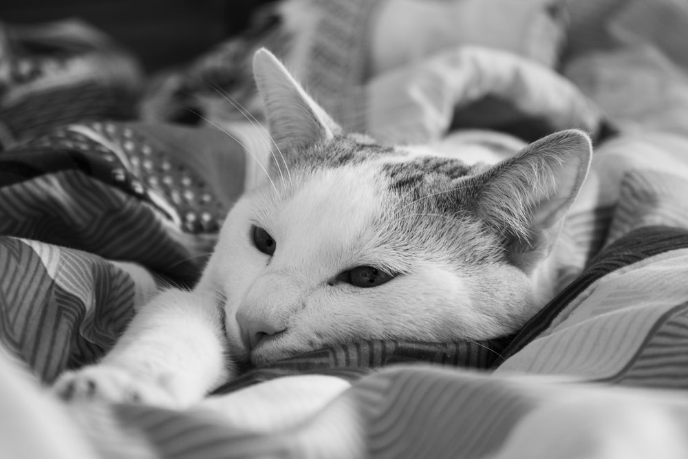 grayscale photo of cat lying on bed