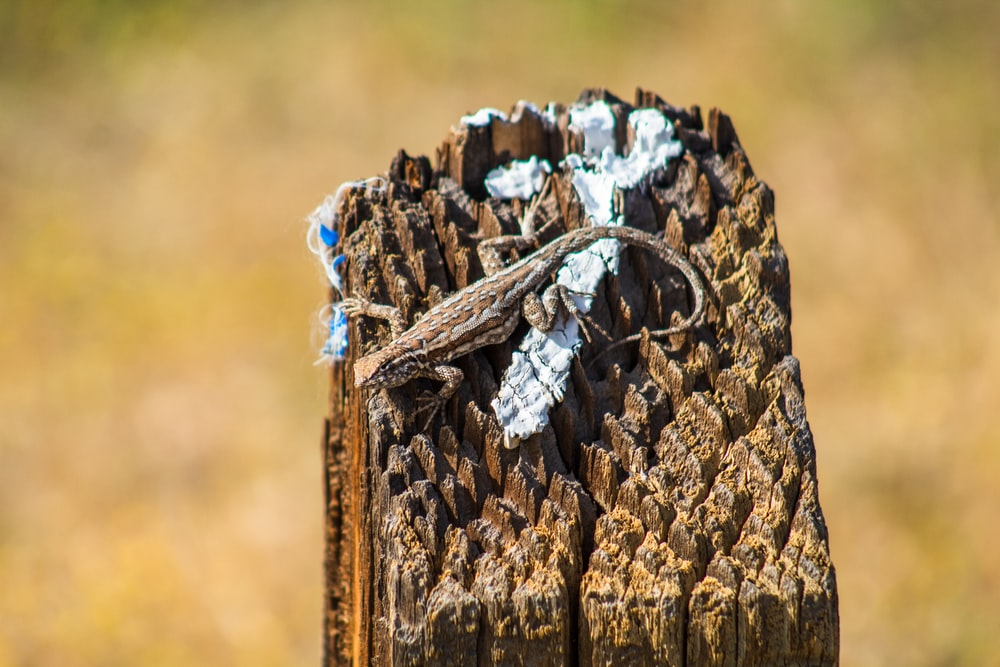 brown wooden log with white and blue textile