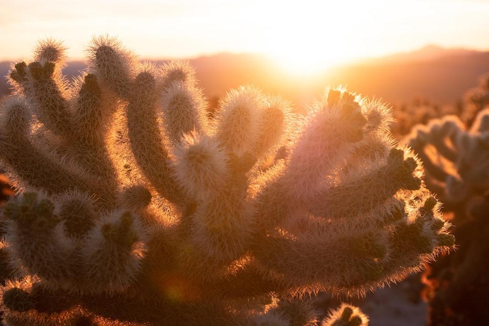 green cactus plant during daytime