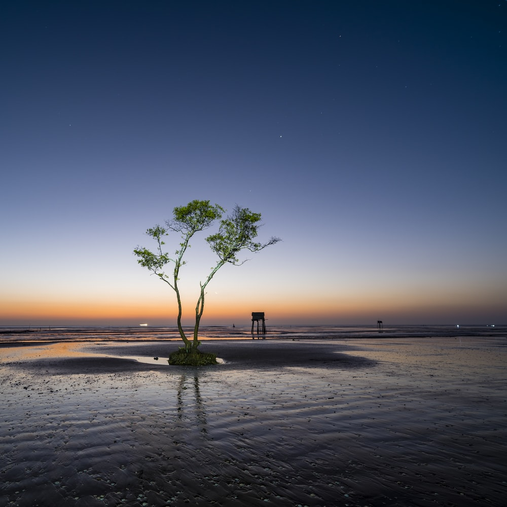 green tree on brown sand during sunset