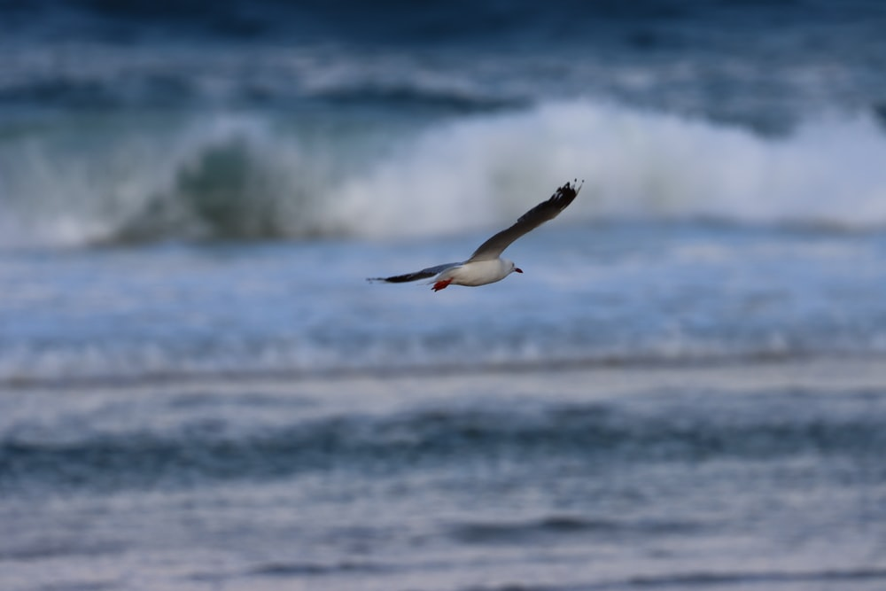 white and black bird flying over the sea during daytime