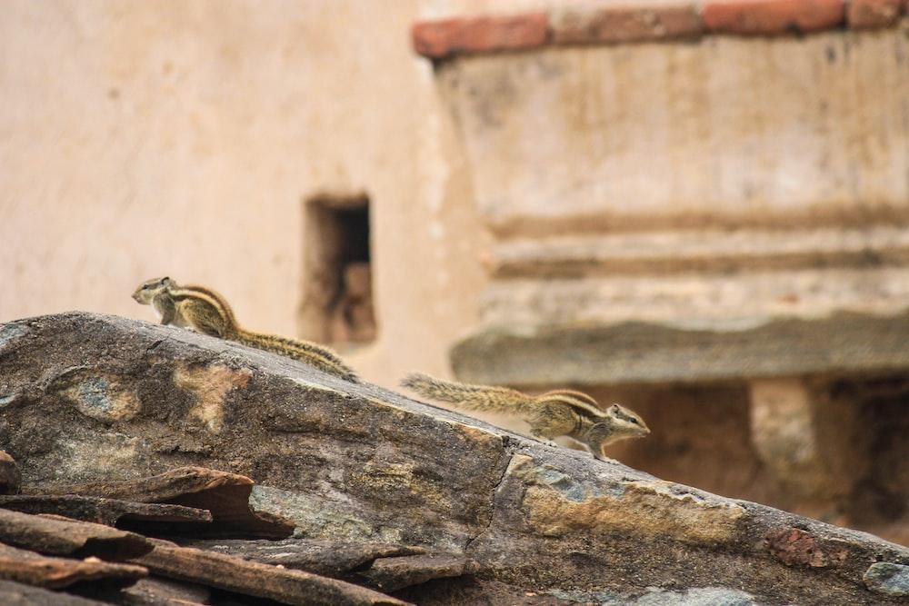 brown frog on brown rock