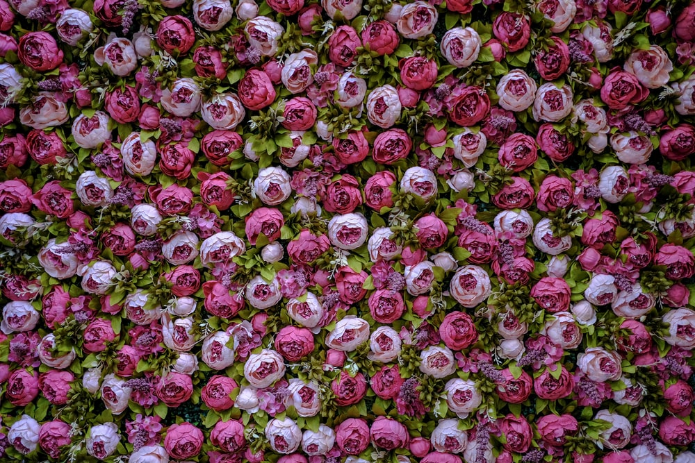 pink and green flower petals