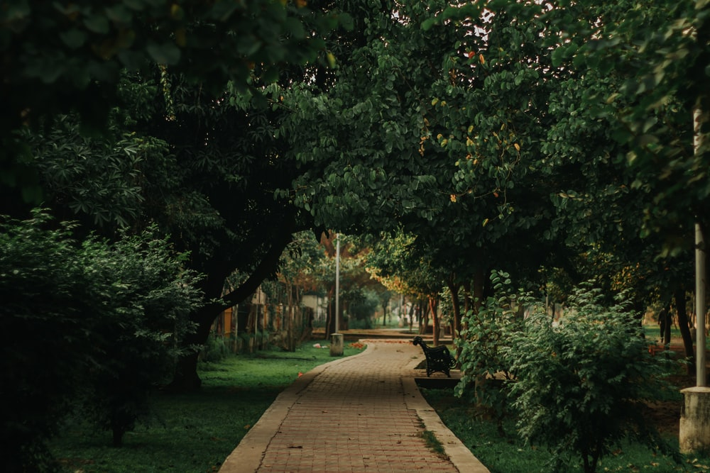 brown wooden pathway between green grass and trees during daytime