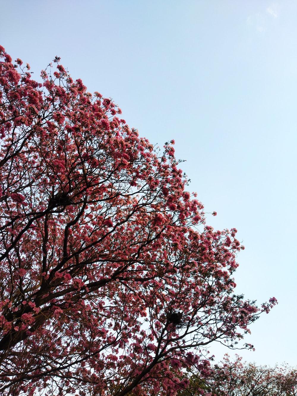 red leaf tree under blue sky during daytime