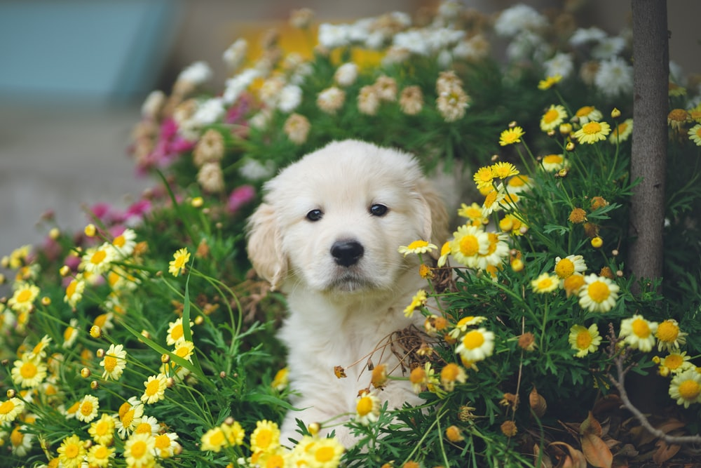 white and brown short coated puppy on blue flower field during daytime