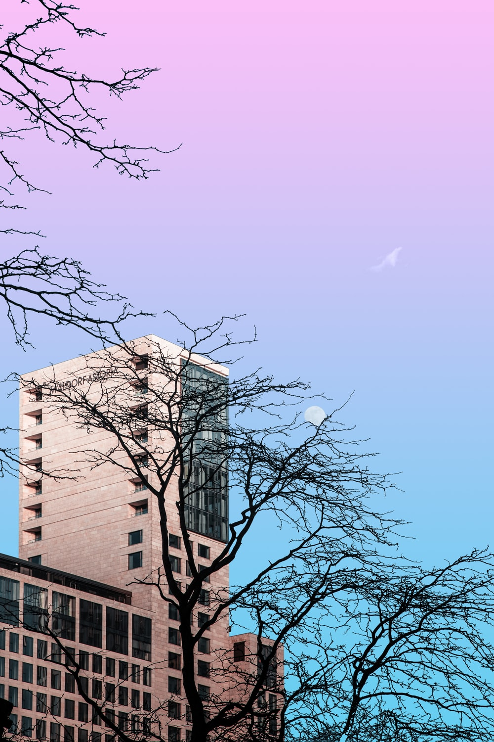 bare tree near brown concrete building during daytime