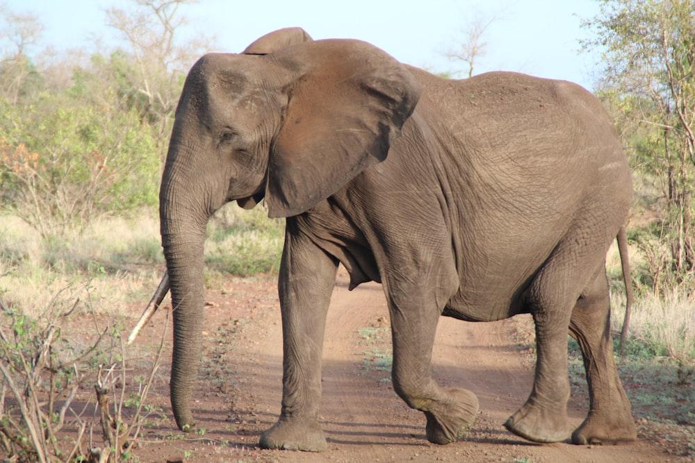 2 brown elephant walking on brown dirt road during daytime