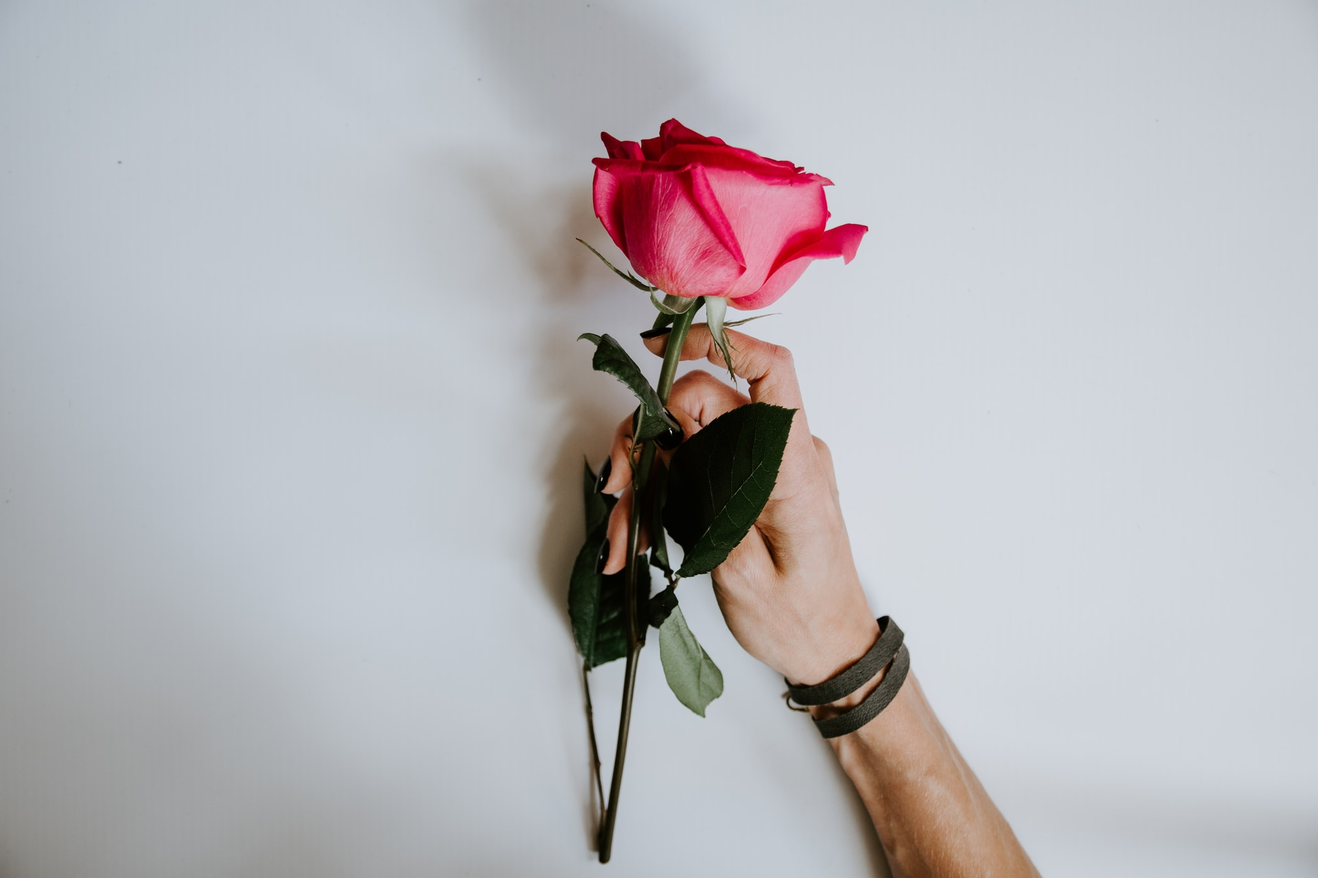 person holding red rose flower