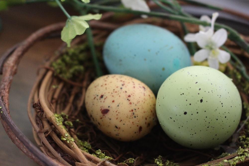 blue egg on brown nest