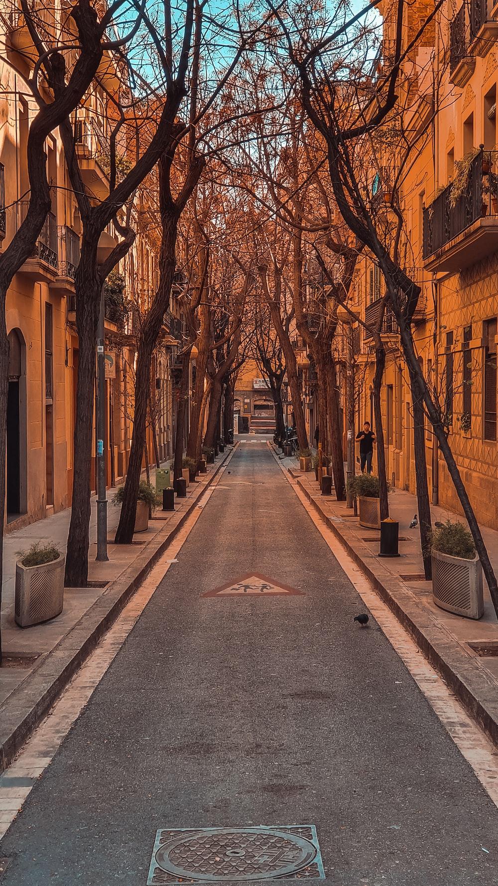 brown trees on sidewalk during daytime