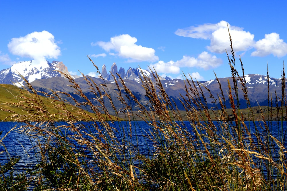 brown grass on lake near snow covered mountains under blue sky during daytime