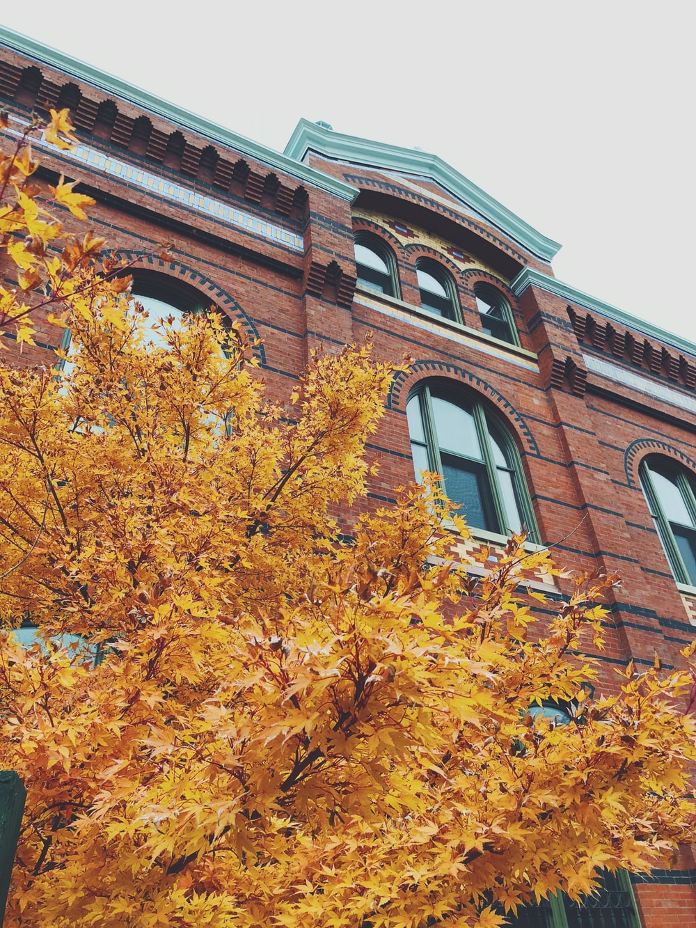 brown tree near brown concrete building