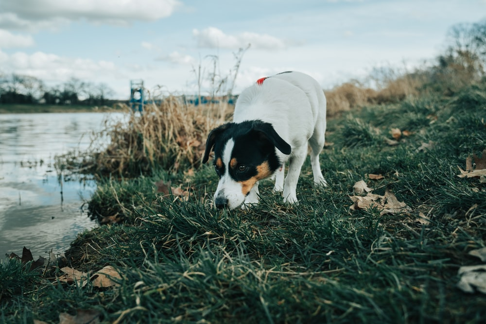 white and black short coated dog on brown grass field during daytime