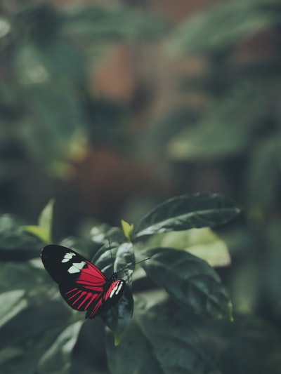 red white and black butterfly on green leaf