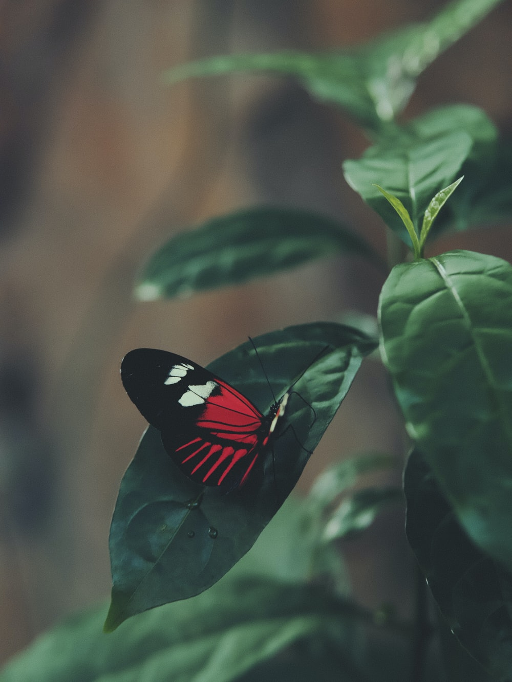 black and red butterfly perched on green leaf