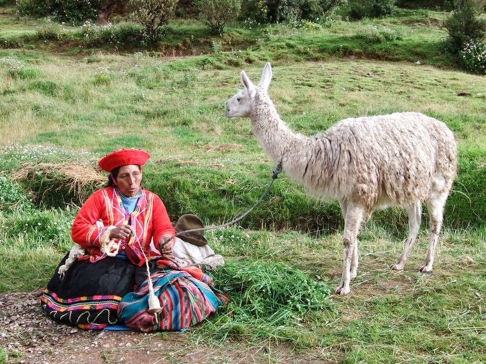 man in blue jacket and red hat sitting beside white llama during daytime
