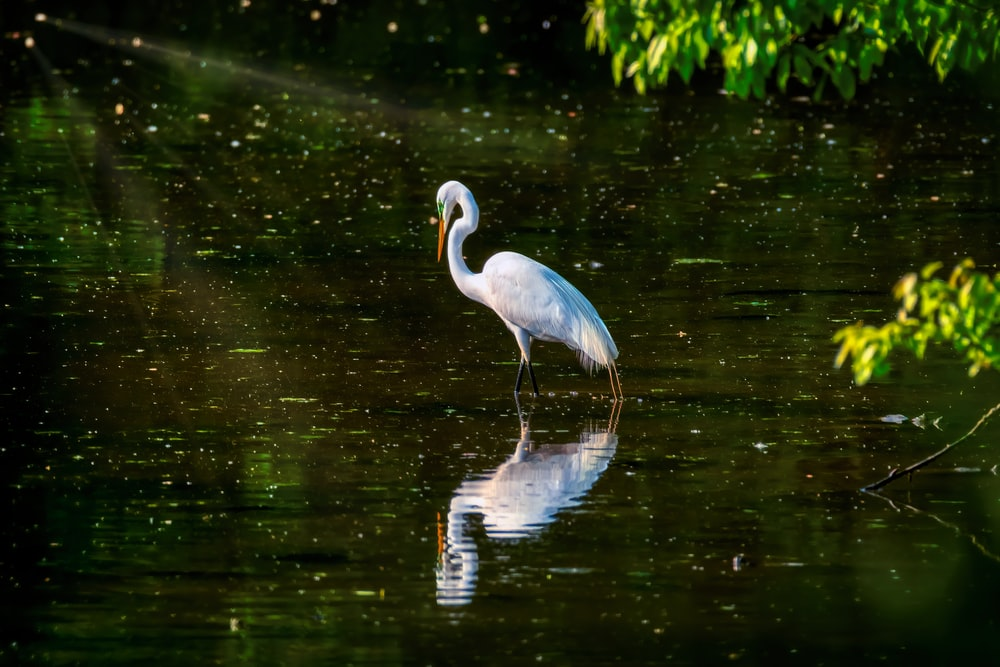white long beak bird on water