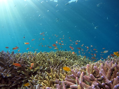 school of fish in body of water reef teams background
