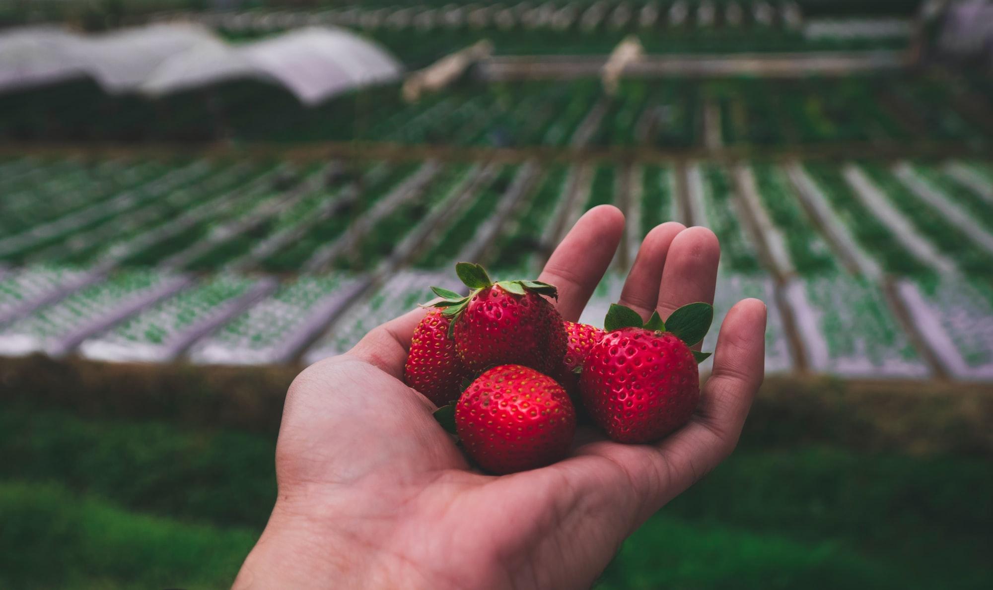 Baguio Strawberries