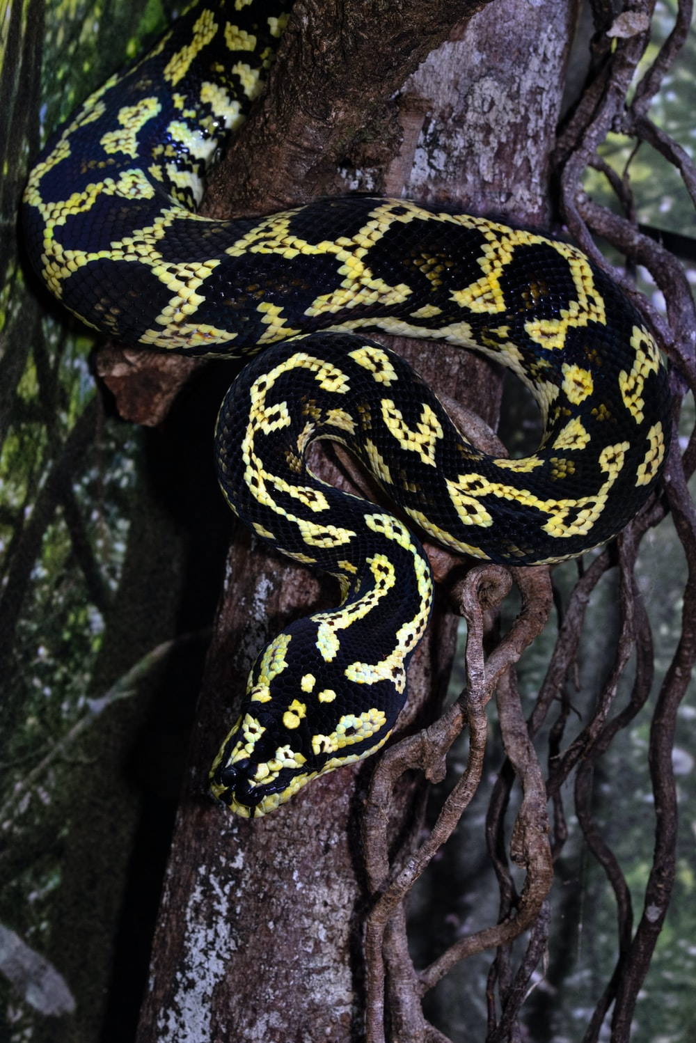 black and yellow snake on brown tree branch