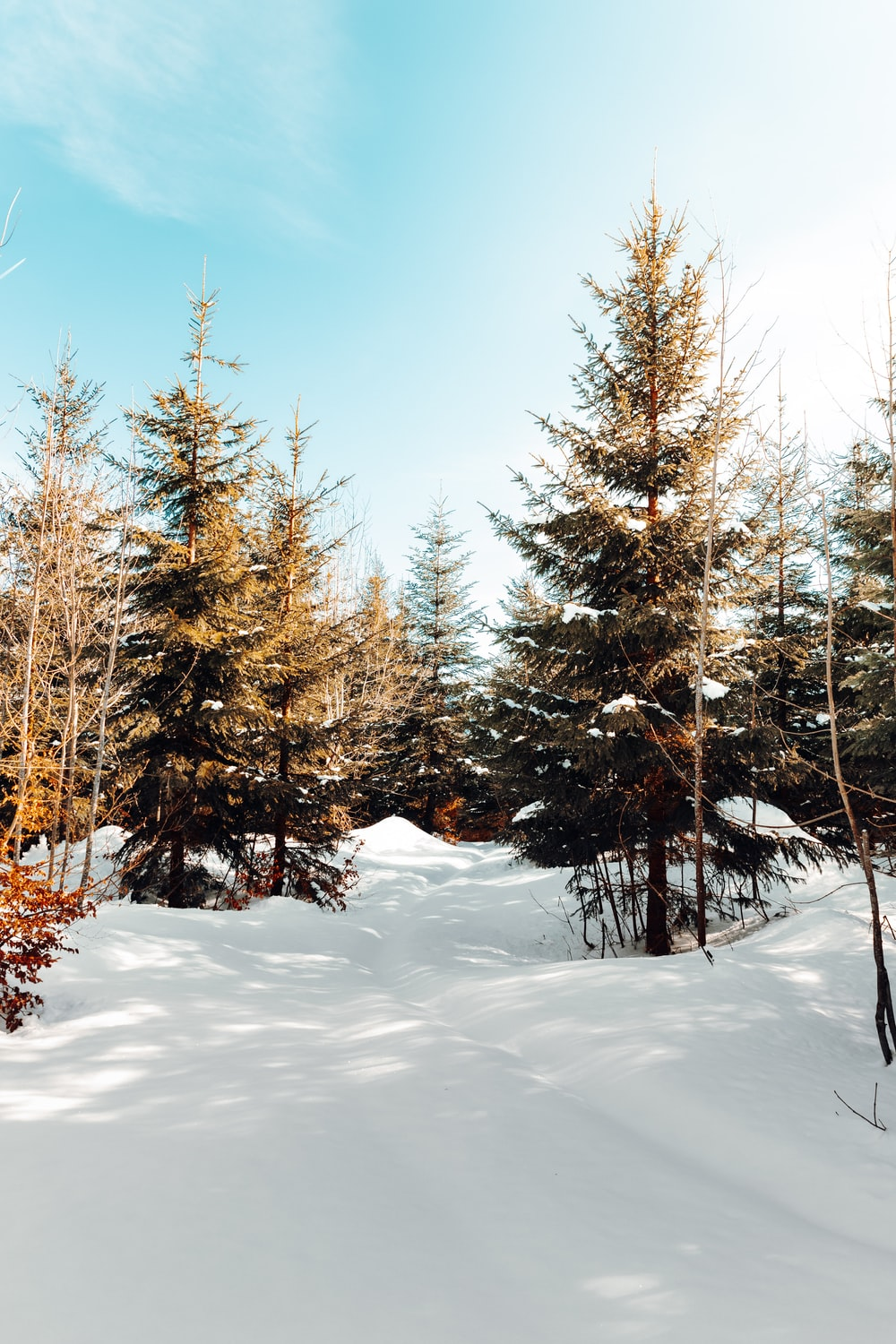brown trees on snow covered ground under blue sky during daytime