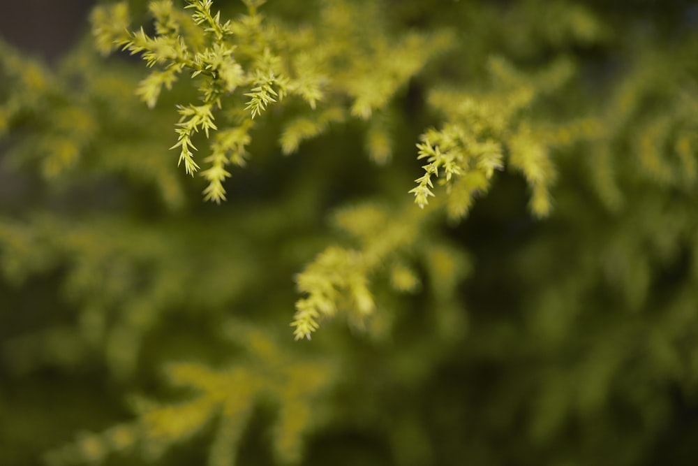green leaf tree in close up photography