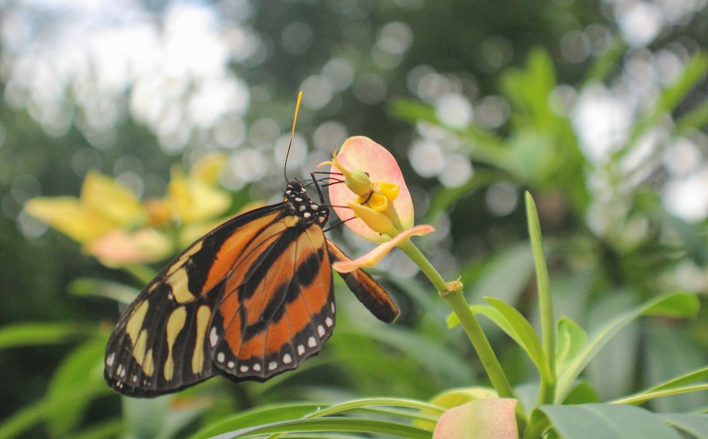 monarch butterfly perched on yellow flower in close up photography during daytime