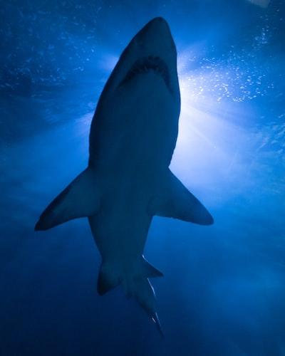 black shark under blue sky