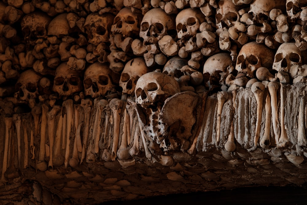 brown wooden skull wall decor