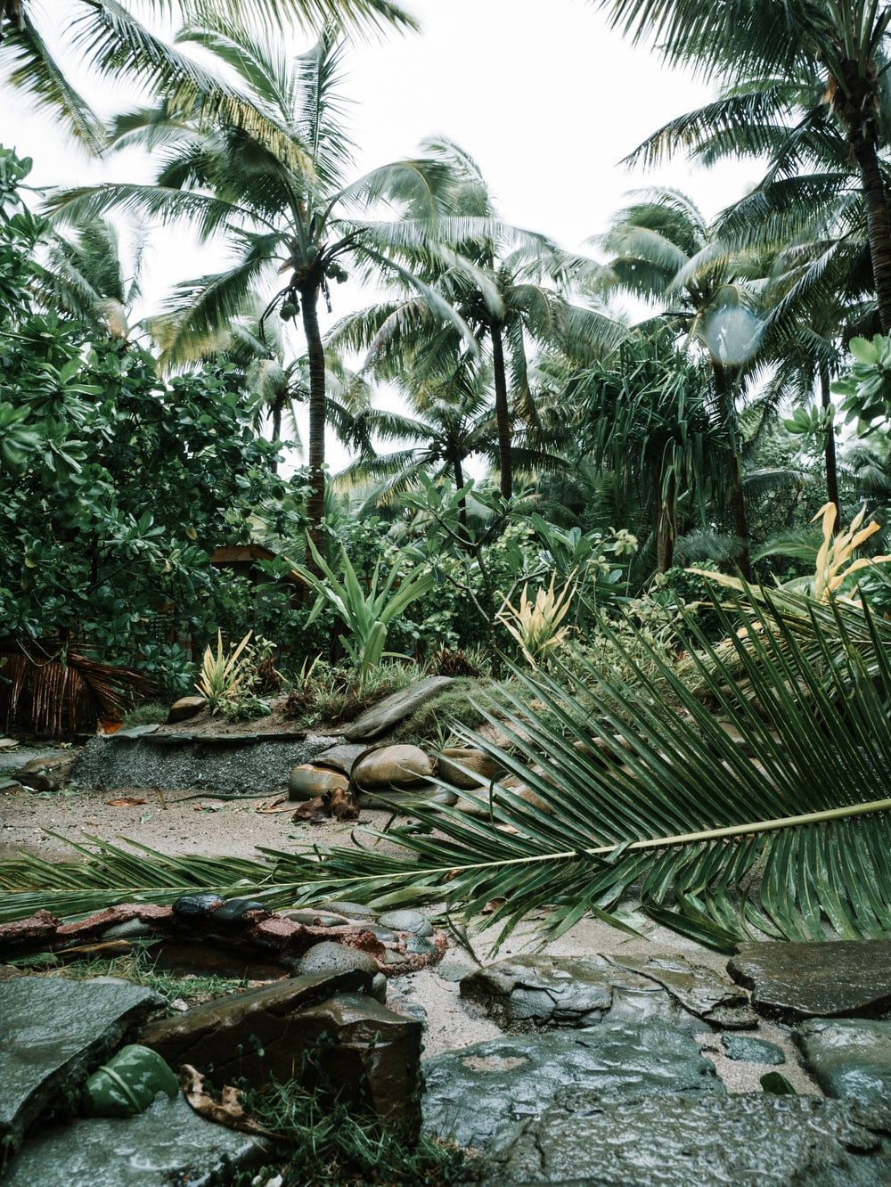 green coconut palm tree on brown soil
