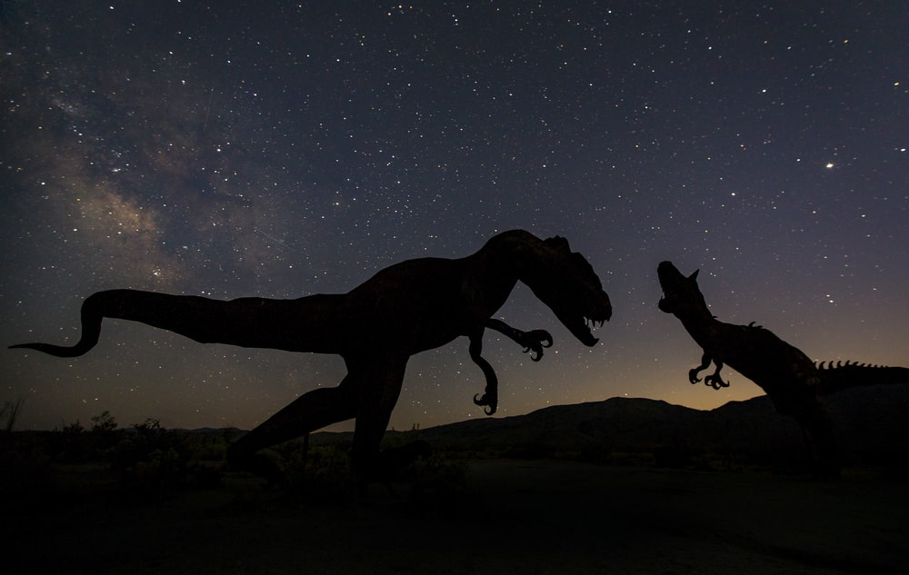 silhouette of 2 horse under starry night