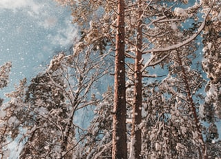 brown tree under blue sky