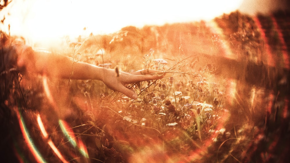 persons hand on brown grass