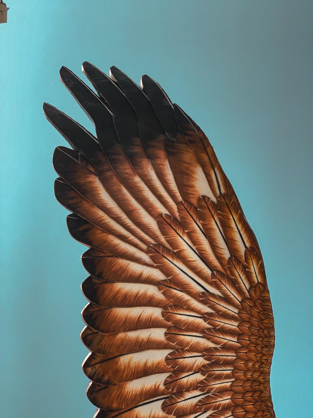 brown bird flying during daytime