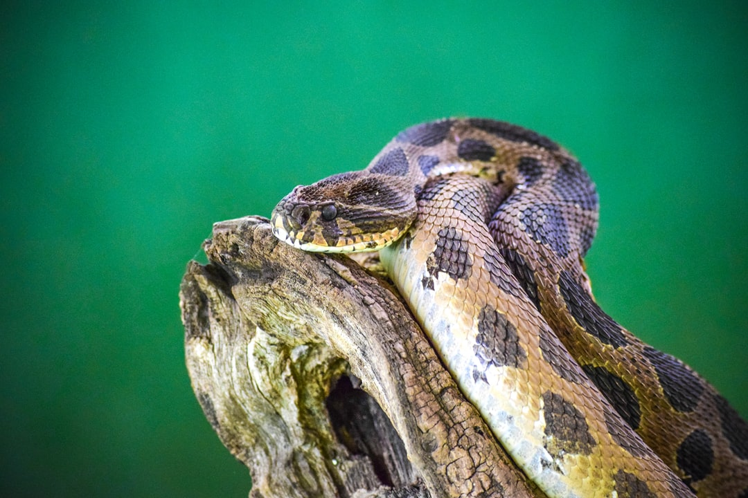 Snake ~~