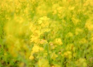 yellow flower field during daytime