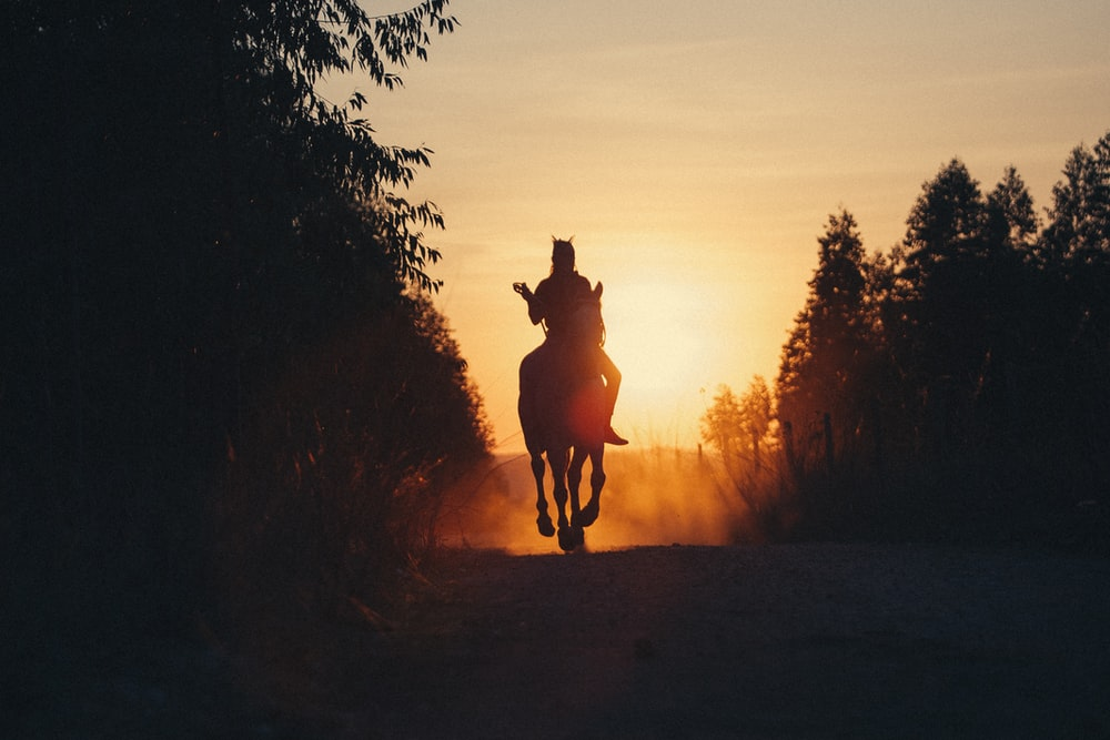 silhouette of person riding horse during sunset