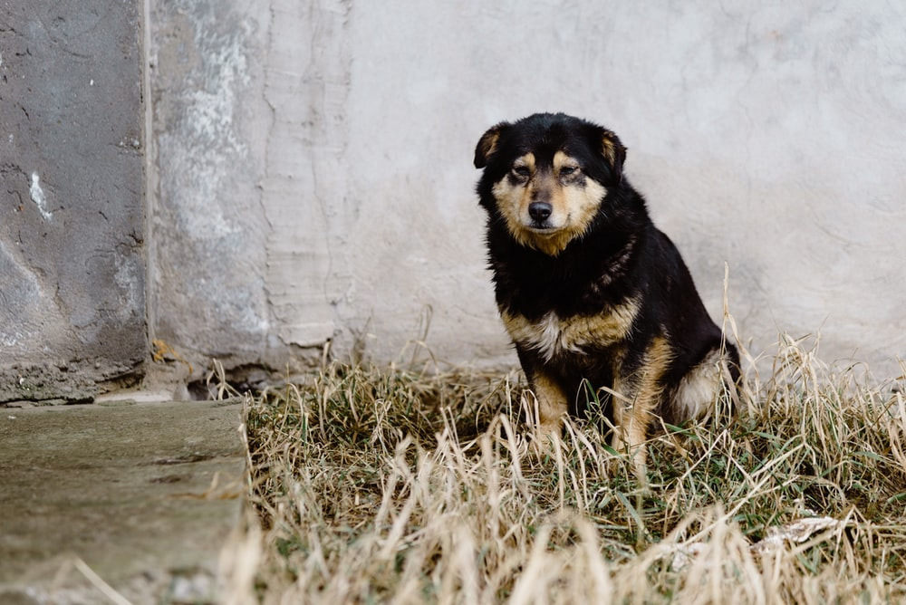 black and tan short coat medium sized dog sitting on green grass field during daytime